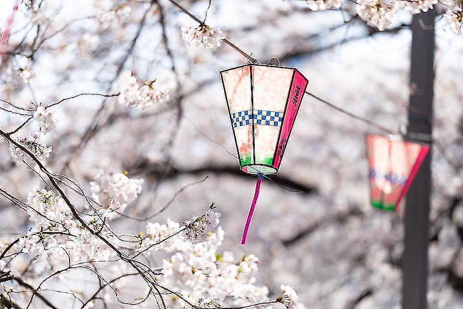 日本じゃなくてもお花見が楽しめる?!