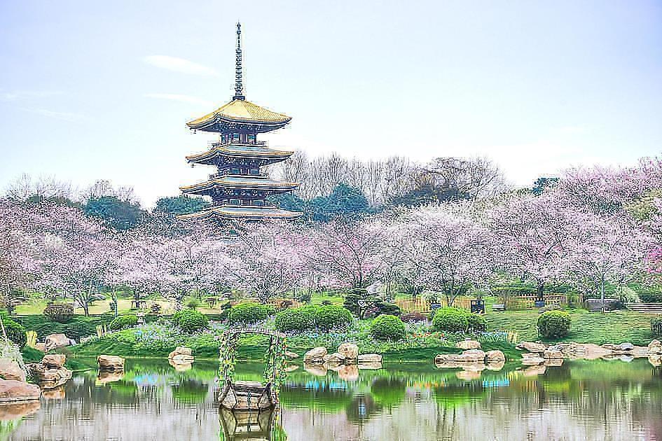 海外のオススメお花見スポット:中国・武漢