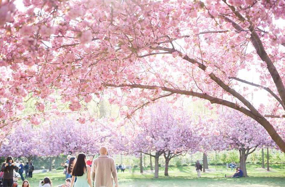 海外のオススメお花見スポット:アメリカ・ニューヨーク