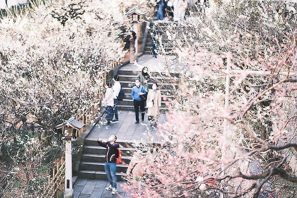 4月に入って桜のシーズン到来!